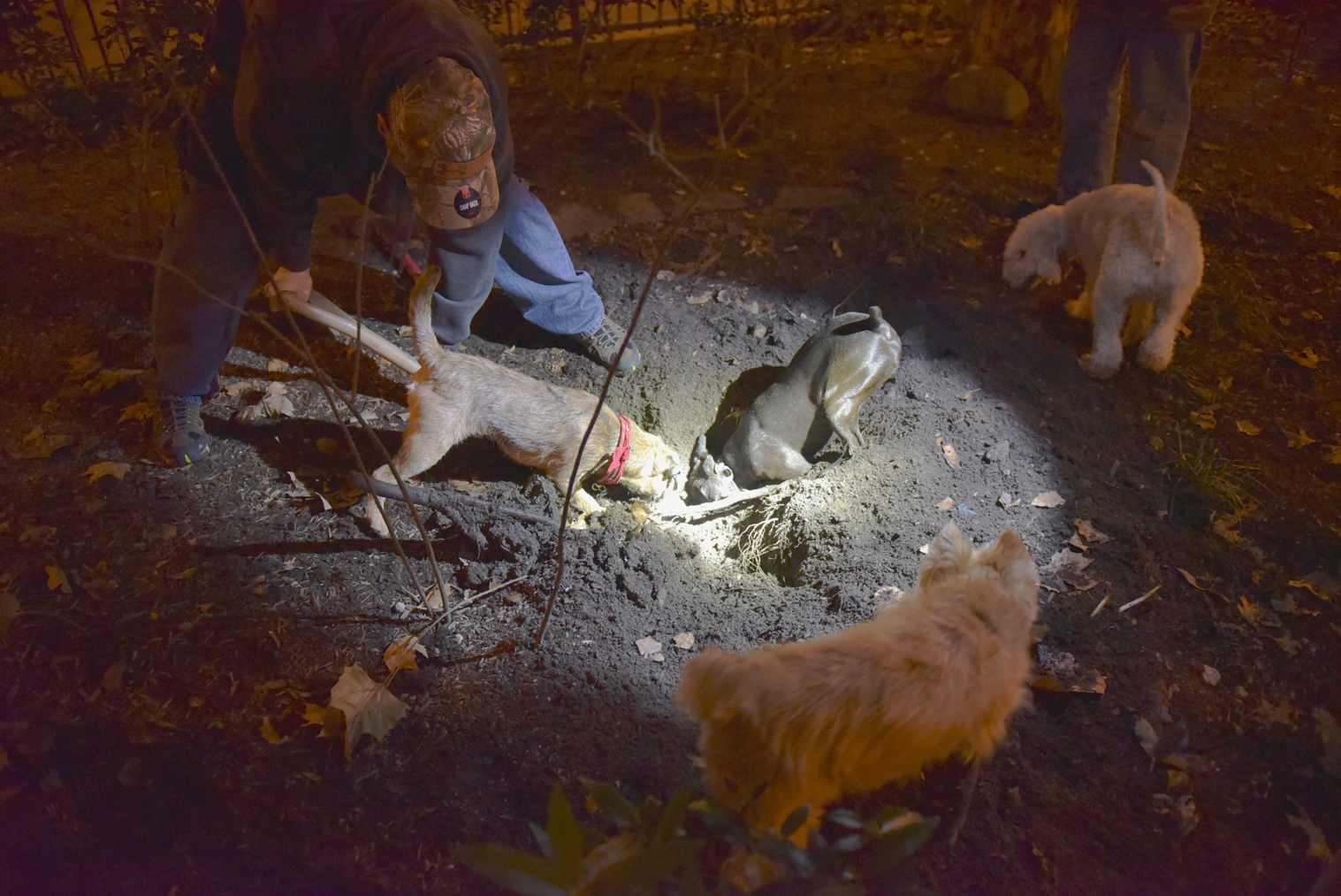 It Was Dogs vs Rats in Nighttime Tribeca Garden Raid