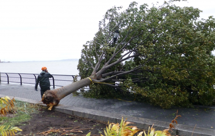 A downed tree on Tuesday in Battery Park City.